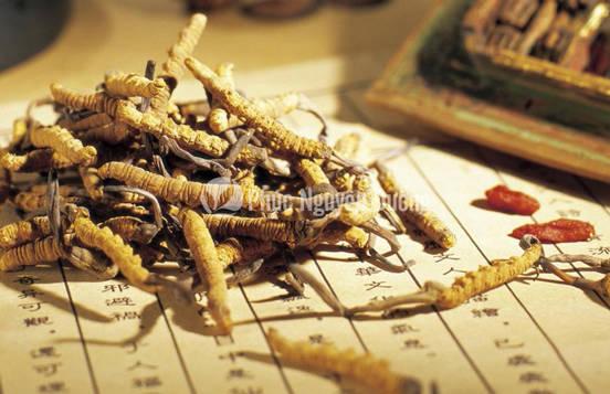 Đông trùng hạ thảo sản phẩm từ thiên nhiên