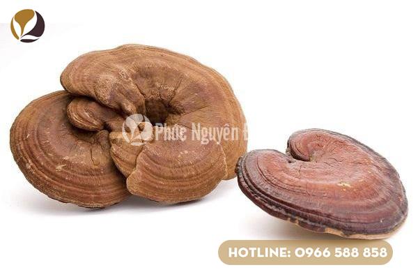 Trà nấm linh chi là một cách sử dụng phổ biến của người tiêu dùng