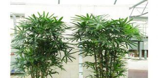 Chọn loại cây gì để trồng trong sân vườn?