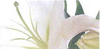 Ba chức năng quan trọng nhất của hoa cảnh