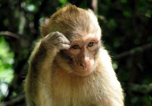 Con khỉ số mấy? Giải mã giấc mơ về con khỉ