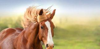 Mơ thấy ngựa đánh con gì là vấn đề được nhiều người quan tâm